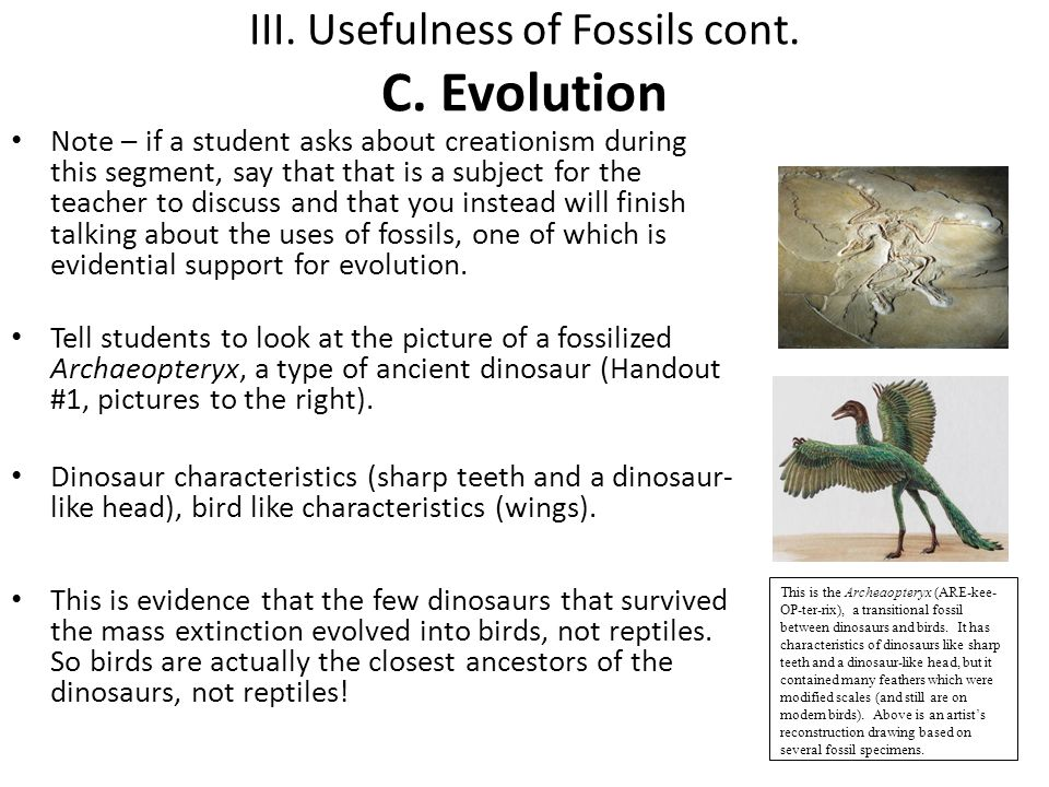III. Usefulness of Fossils cont. C. Evolution