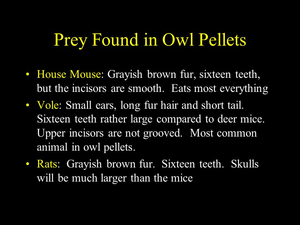 Prey Found in Owl Pellets
