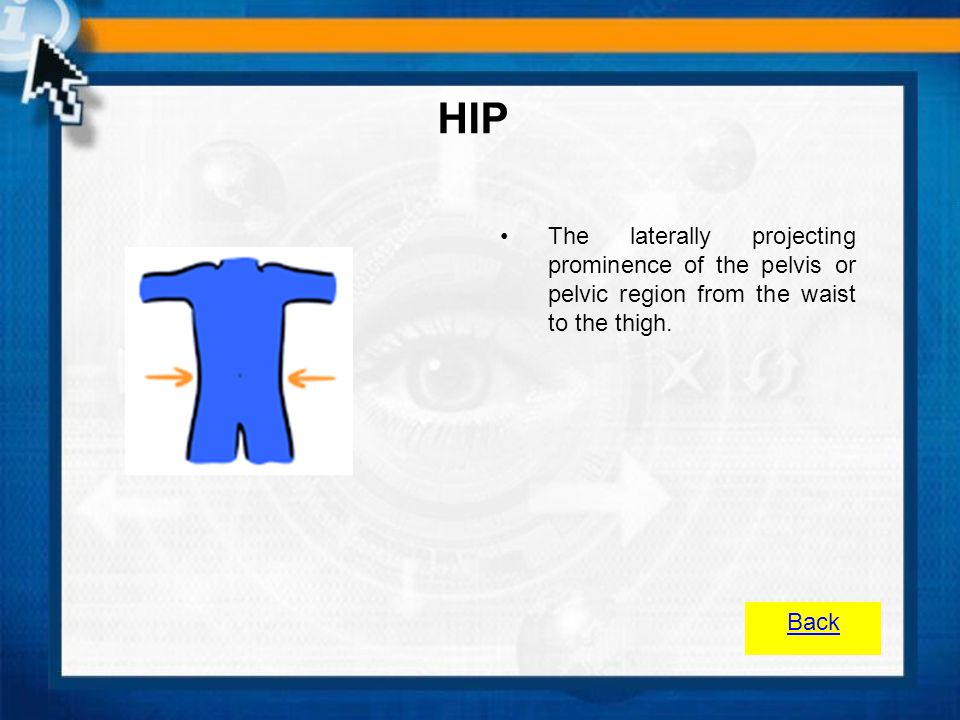 HIP The laterally projecting prominence of the pelvis or pelvic region from the waist to the thigh.