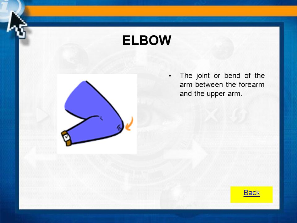 ELBOW The joint or bend of the arm between the forearm and the upper arm. Back