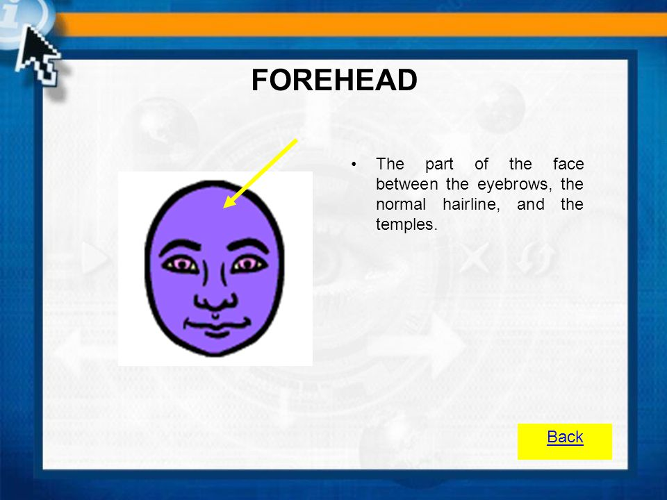 FOREHEAD The part of the face between the eyebrows, the normal hairline, and the temples. Back