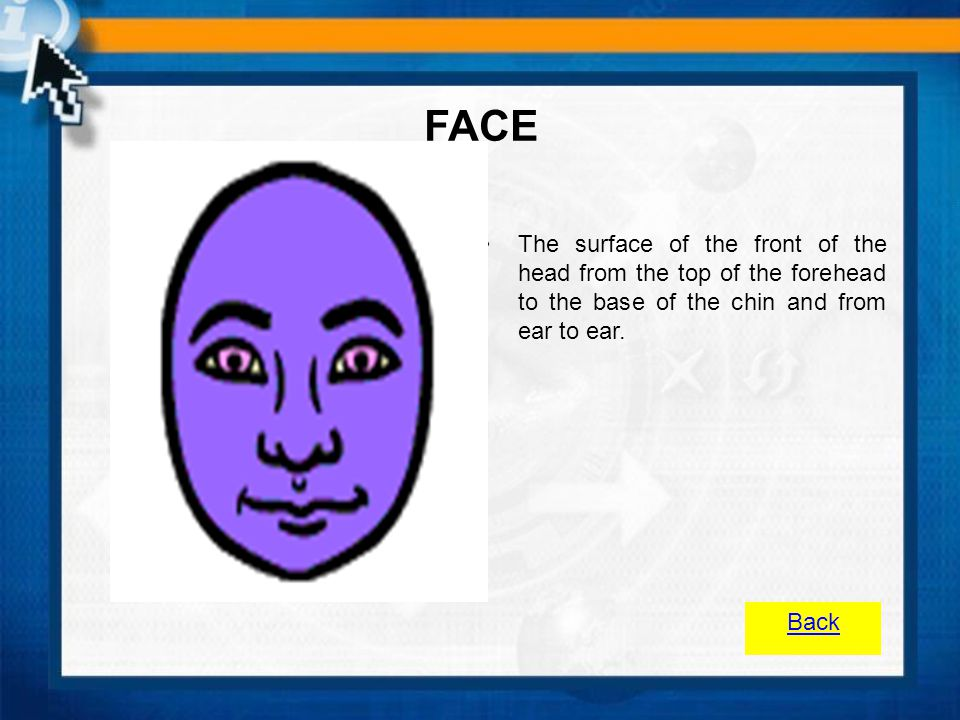 FACE The surface of the front of the head from the top of the forehead to the base of the chin and from ear to ear.