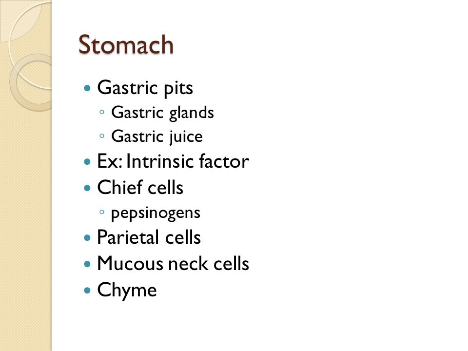 Stomach Gastric pits Ex: Intrinsic factor Chief cells Parietal cells