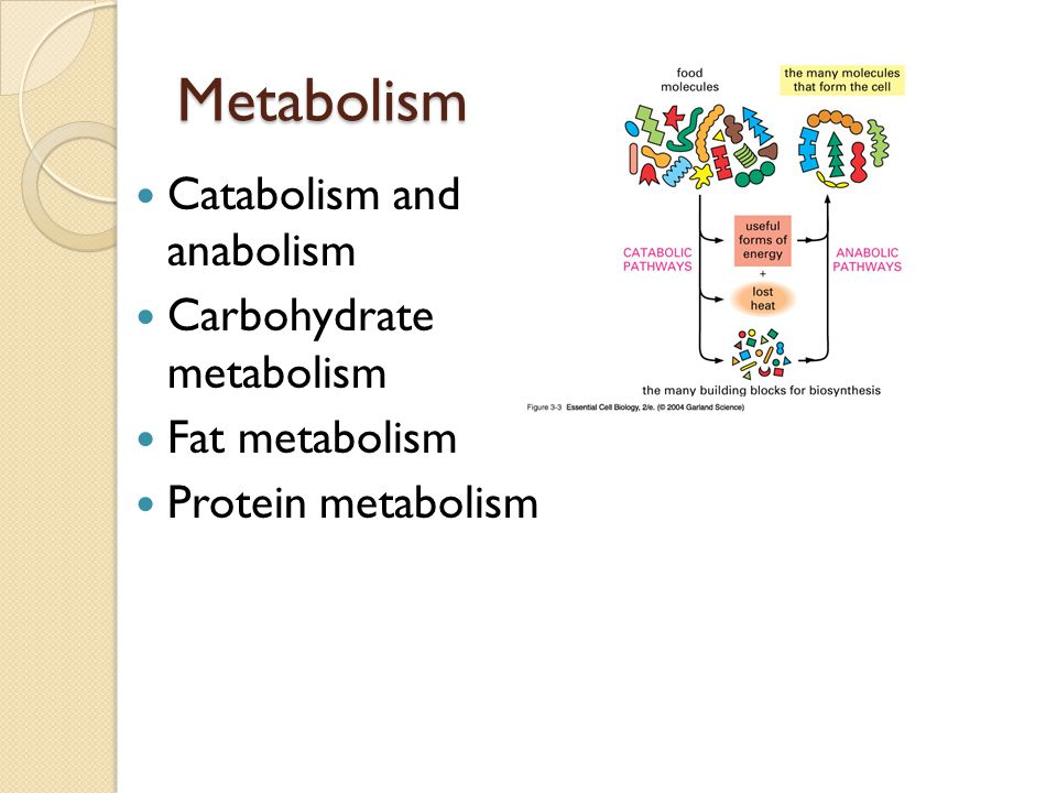 Metabolism Catabolism and anabolism Carbohydrate metabolism