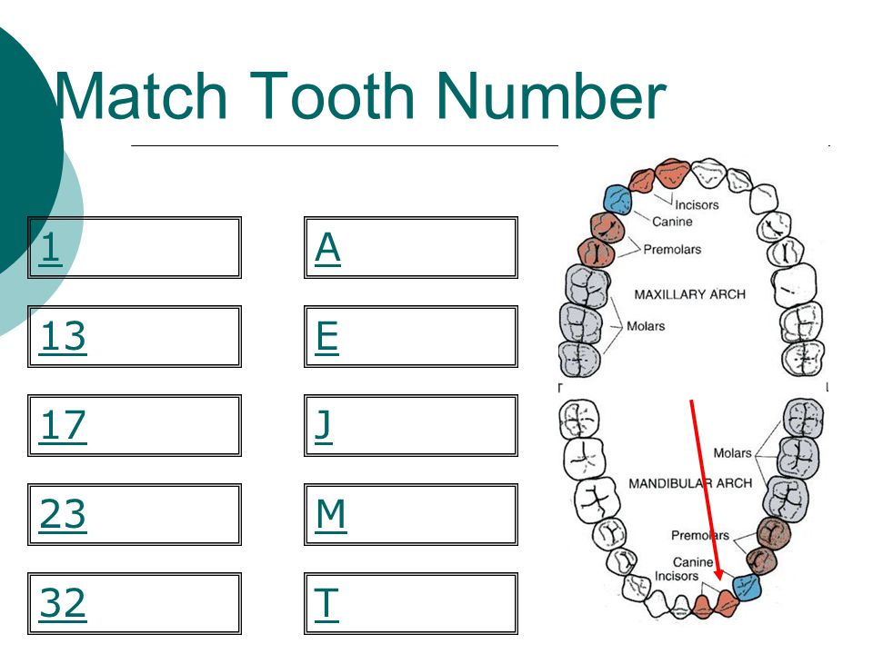 Match Tooth Number 1 A 13 E 17 J 23 M 32 T