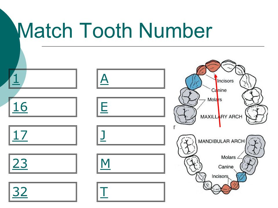 Match Tooth Number 1 A 16 E 17 J 23 M 32 T