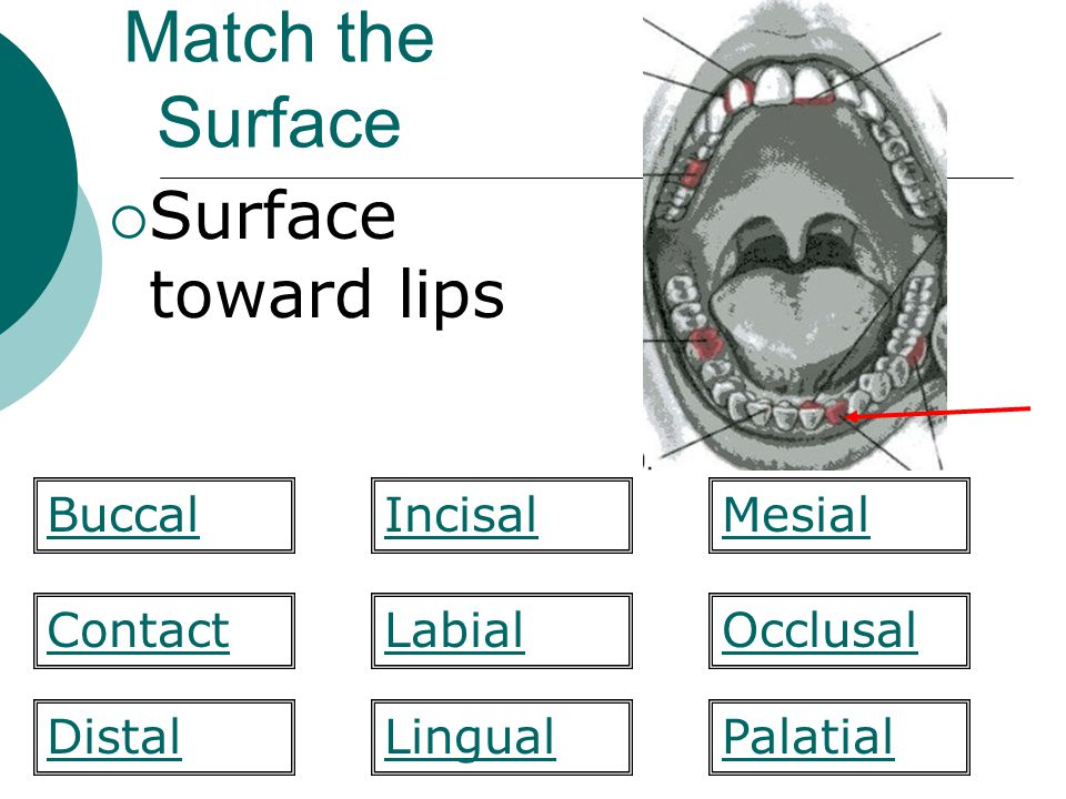 Match the Surface Surface toward lips Buccal Incisal Mesial Contact