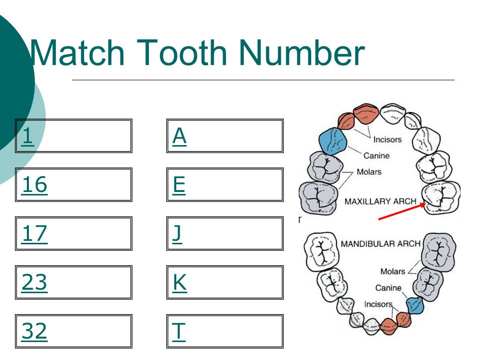 Match Tooth Number 1 A 16 E 17 J 23 K 32 T