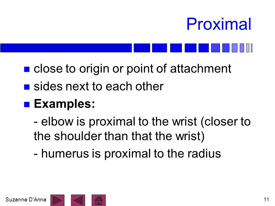 Proximal close to origin or point of attachment