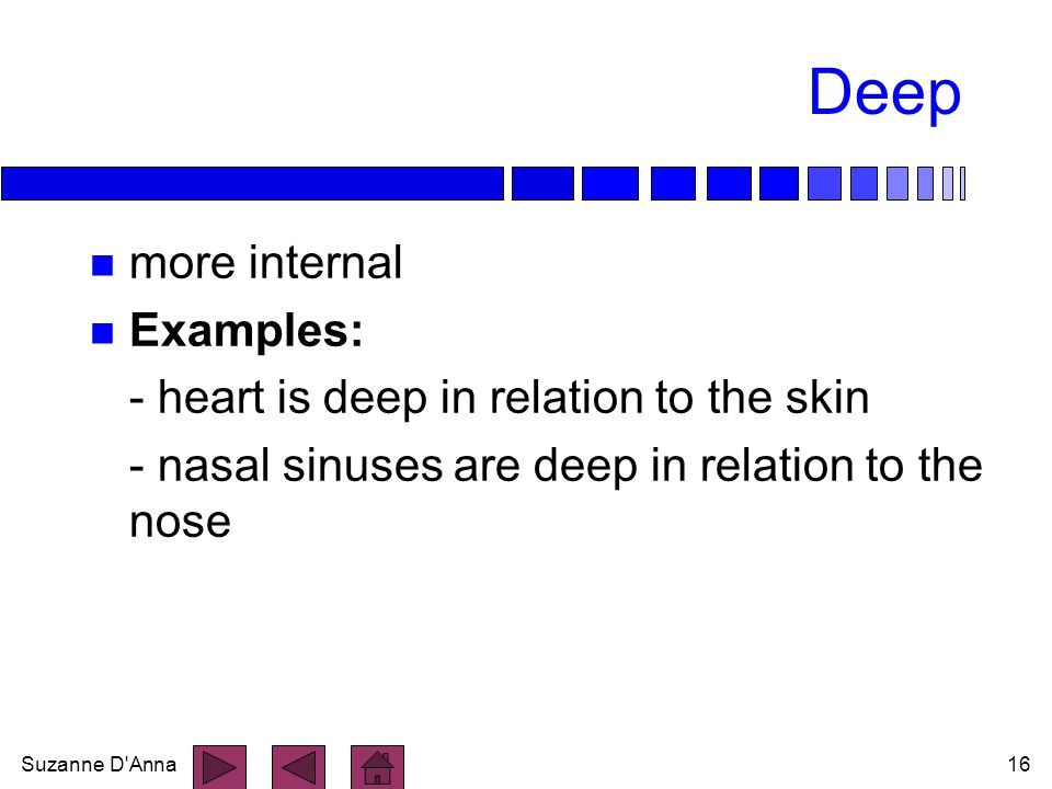 Deep more internal Examples: - heart is deep in relation to the skin