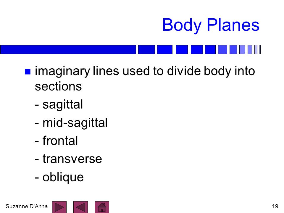 Body Planes imaginary lines used to divide body into sections