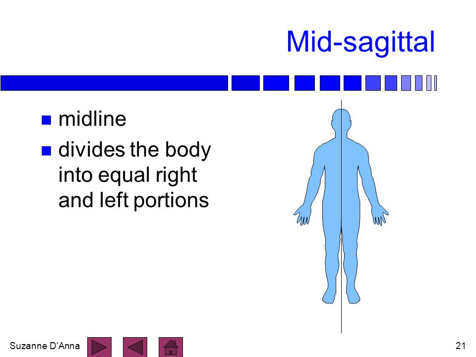Mid-sagittal midline divides the body into equal right and left portions