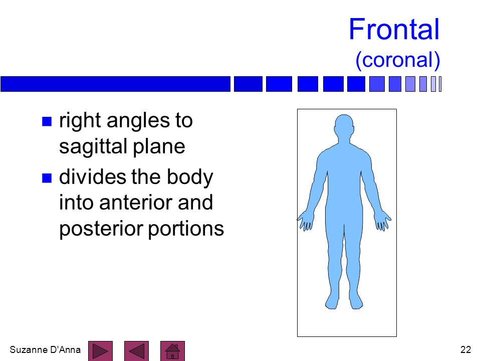 Frontal (coronal) right angles to sagittal plane