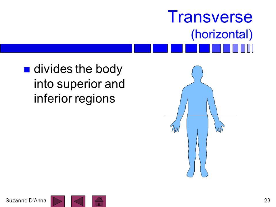 Transverse (horizontal)