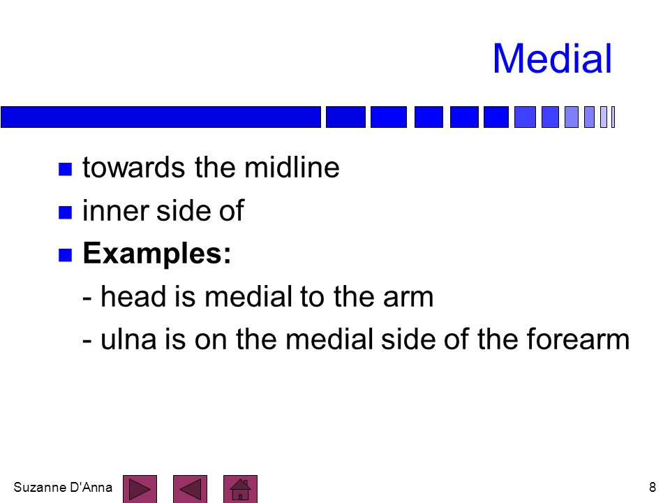 Medial towards the midline inner side of Examples: