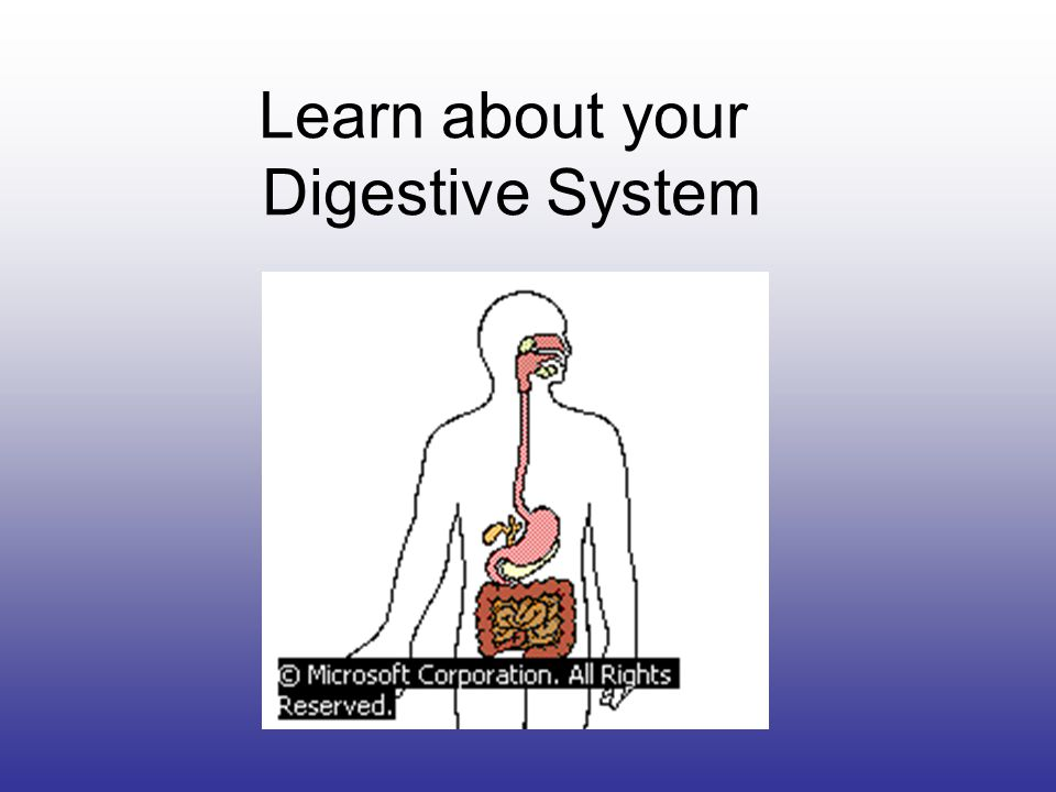 Learn about your Digestive System