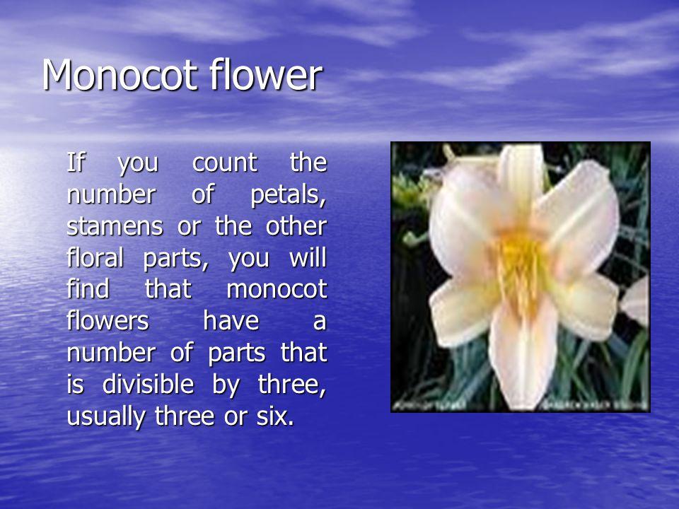Monocot flower