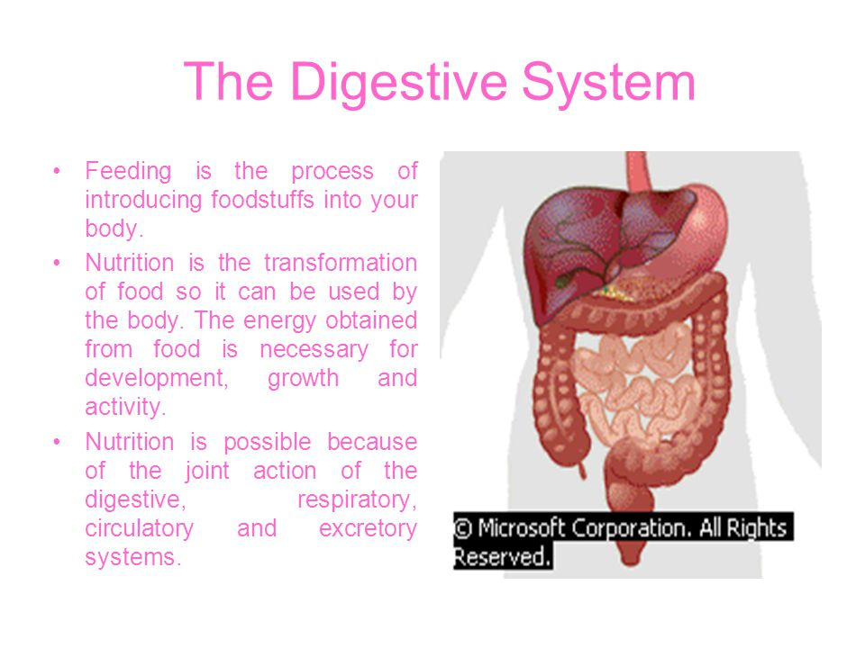 The Digestive System Feeding is the process of introducing foodstuffs into your body.