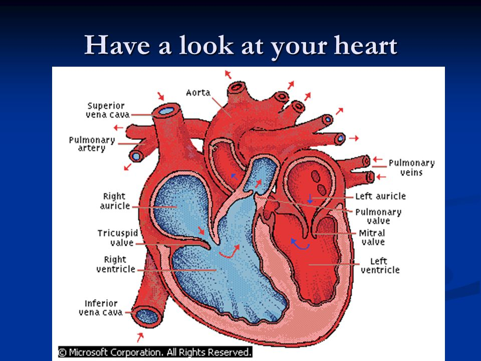 Have a look at your heart