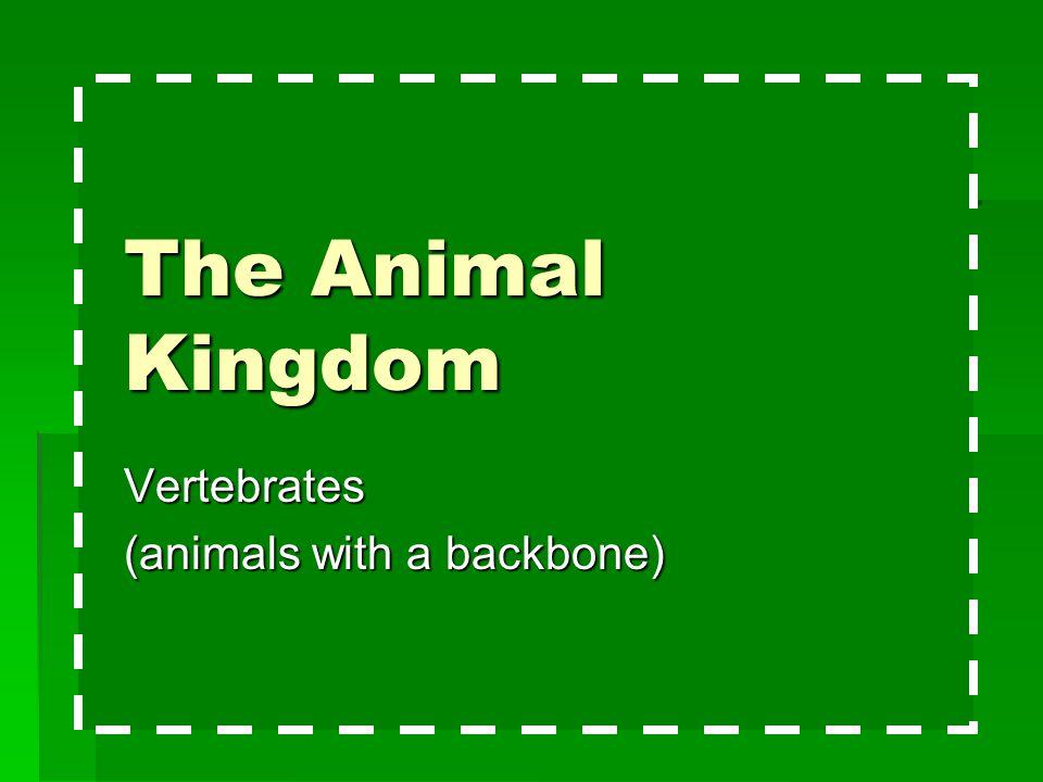 Vertebrates (animals with a backbone)