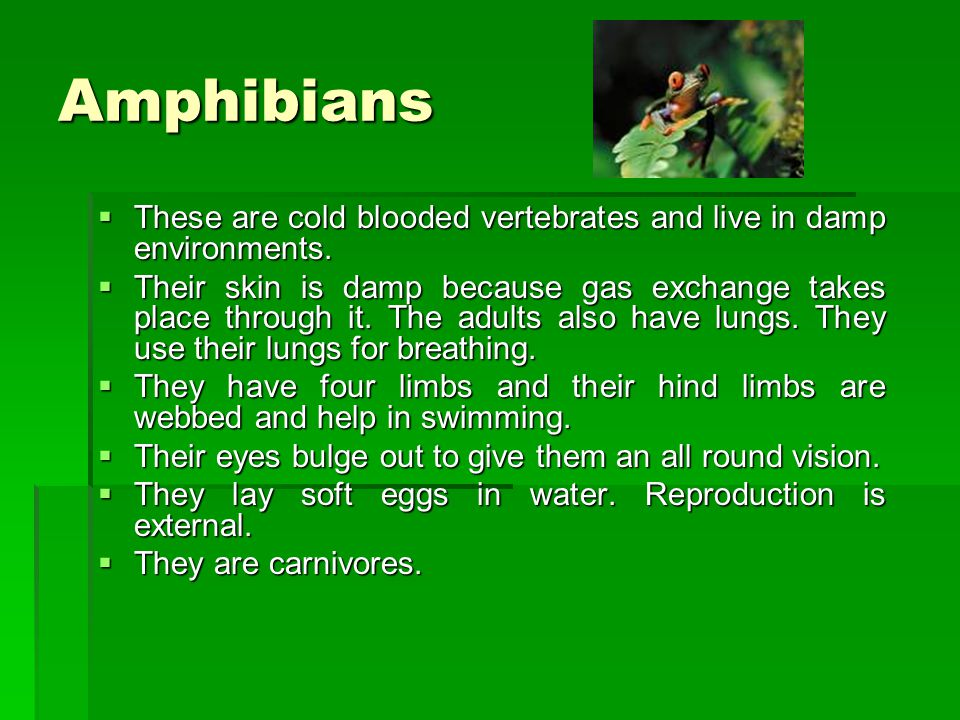Amphibians These are cold blooded vertebrates and live in damp environments.