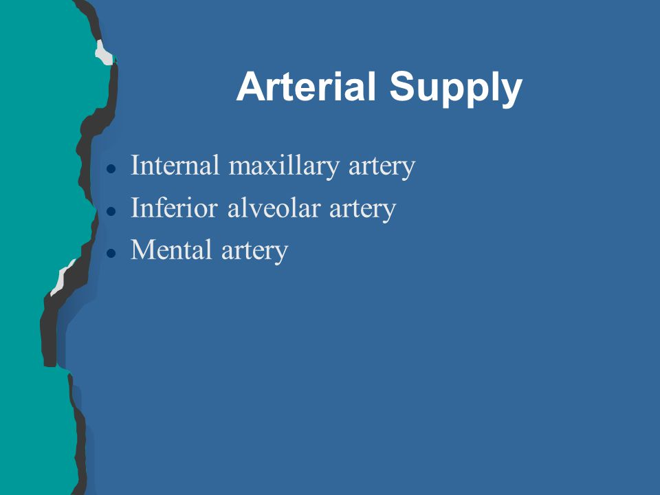 Arterial Supply Internal maxillary artery Inferior alveolar artery
