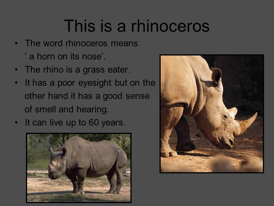 This is a rhinoceros The word rhinoceros means ' a horn on its nose'.
