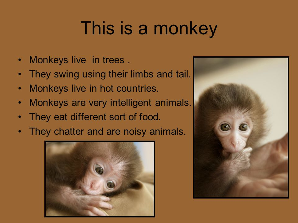 This is a monkey Monkeys live in trees .