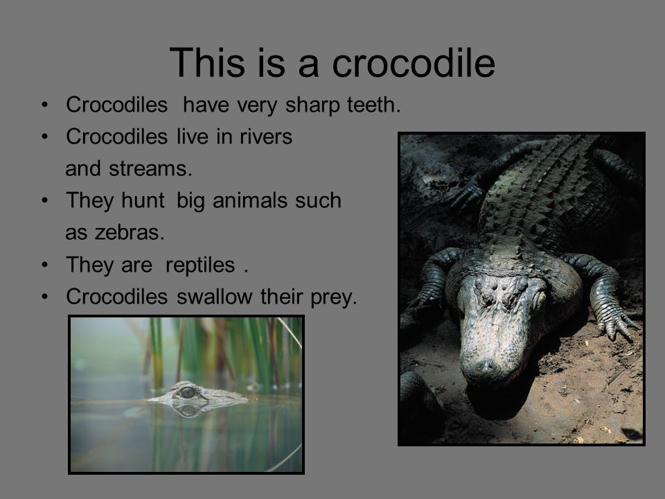 This is a crocodile Crocodiles have very sharp teeth.