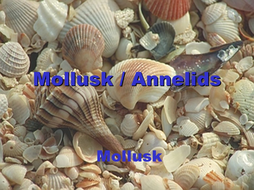Mollusk / Annelids Mollusk