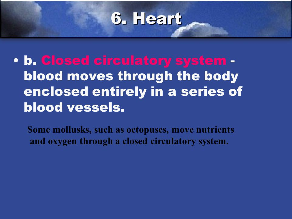 6. Heart b. Closed circulatory system - blood moves through the body enclosed entirely in a series of blood vessels.