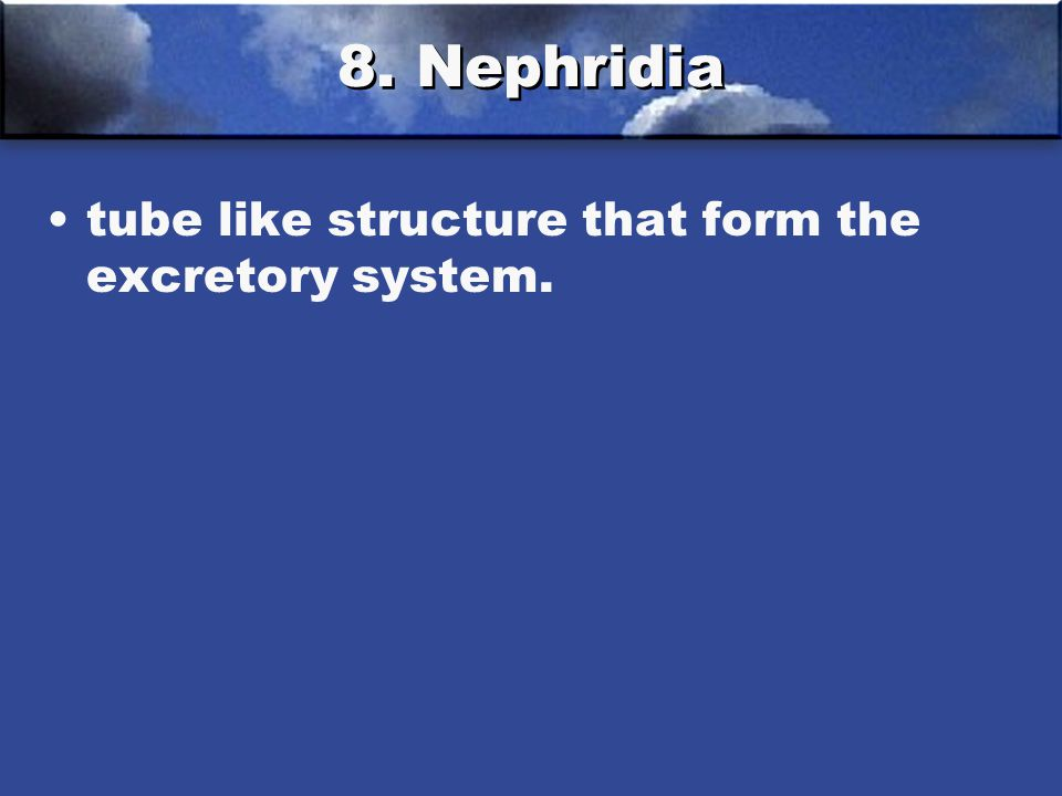 8. Nephridia tube like structure that form the excretory system.