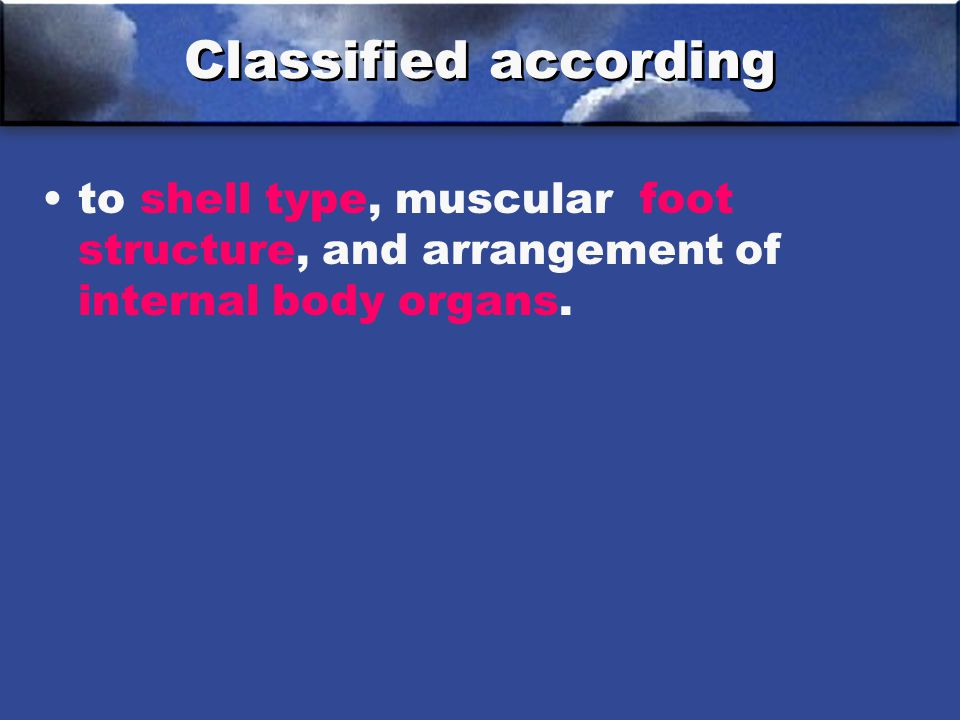 Classified according to shell type, muscular foot structure, and arrangement of internal body organs.