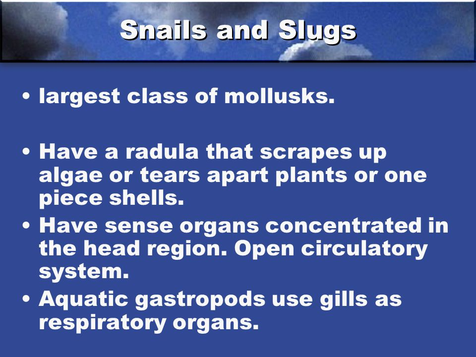 Snails and Slugs largest class of mollusks.