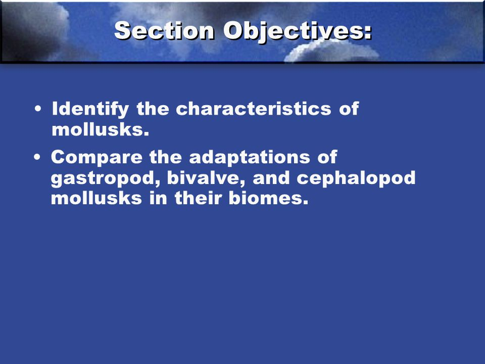 Section Objectives: Identify the characteristics of mollusks.