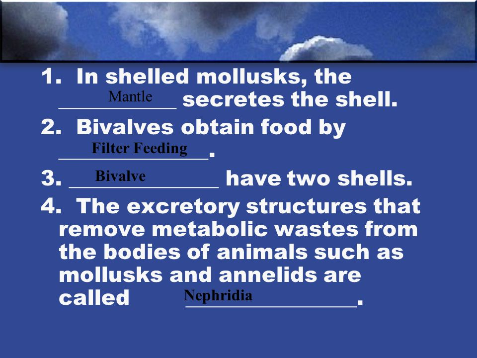 1. In shelled mollusks, the ___________ secretes the shell.