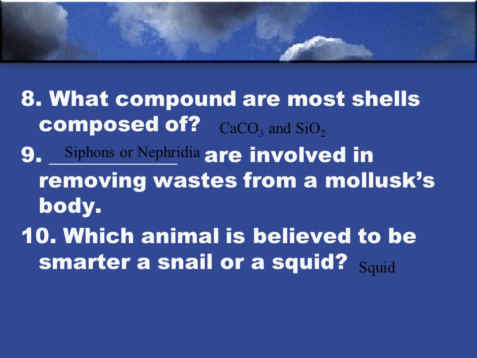 8. What compound are most shells composed of