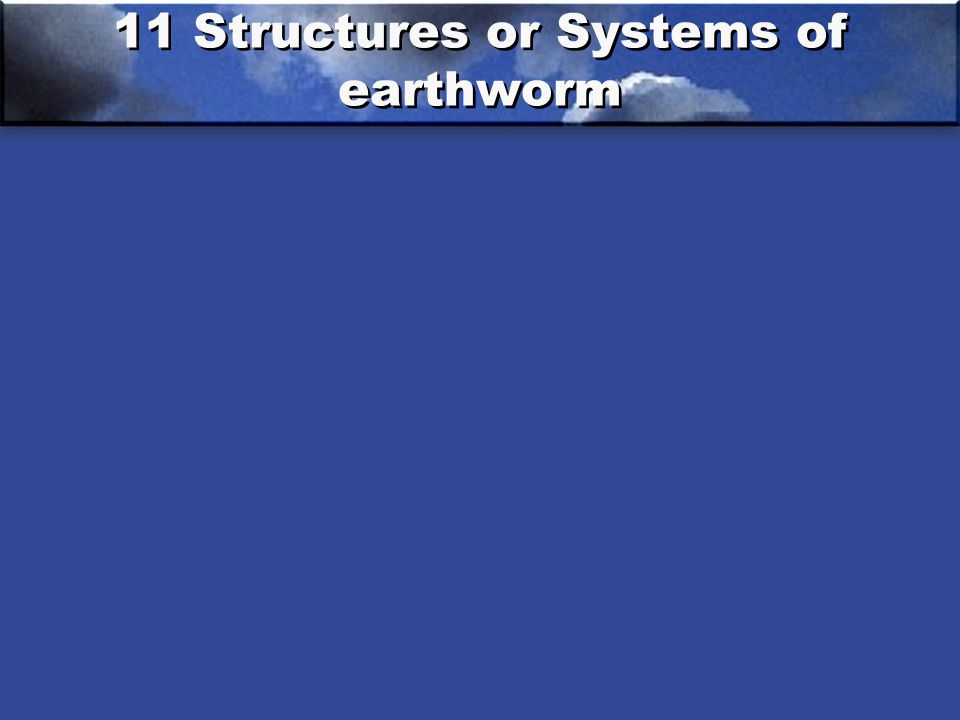 11 Structures or Systems of earthworm
