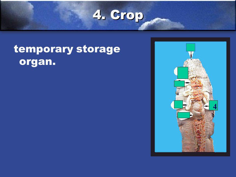 4. Crop temporary storage organ. 4