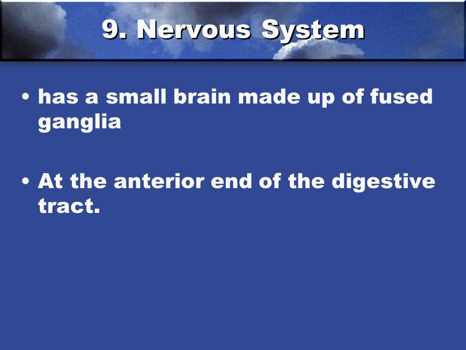 9. Nervous System has a small brain made up of fused ganglia