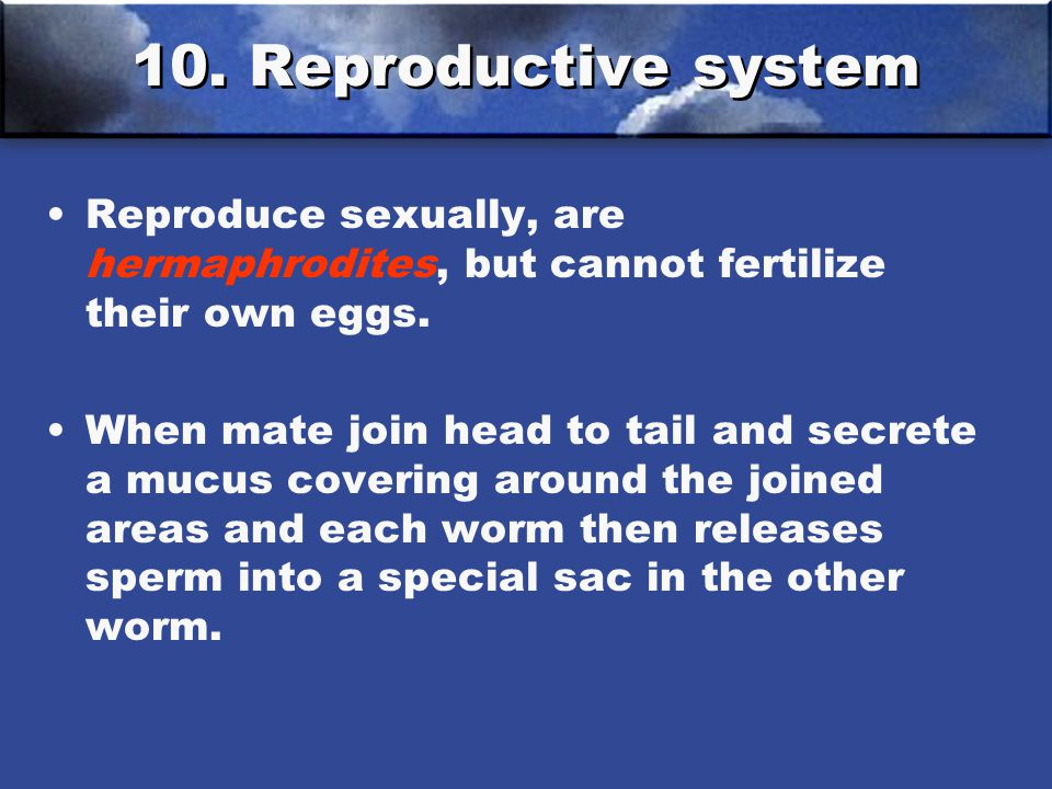 10. Reproductive system Reproduce sexually, are hermaphrodites, but cannot fertilize their own eggs.
