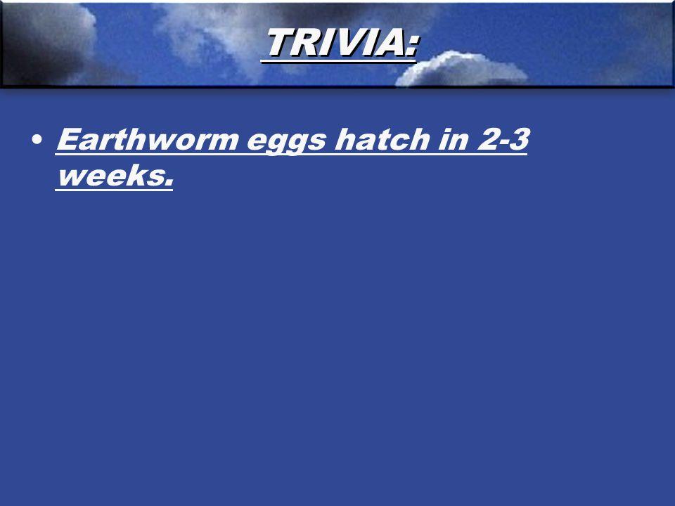TRIVIA: Earthworm eggs hatch in 2-3 weeks.