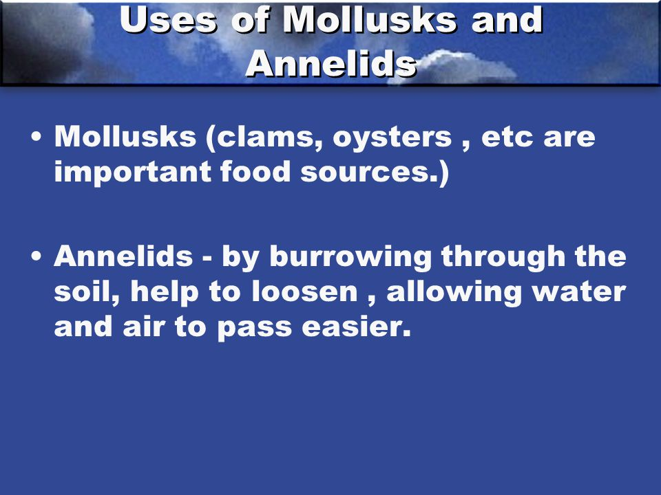 Uses of Mollusks and Annelids