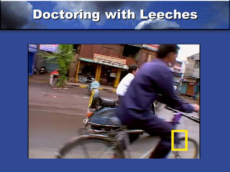 Doctoring with Leeches