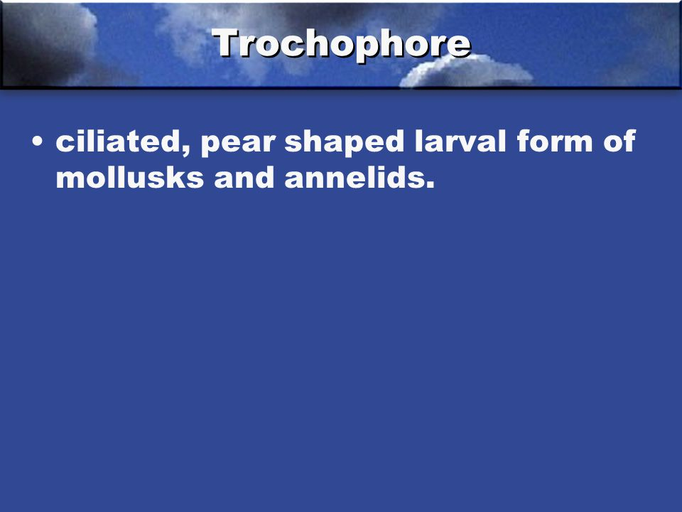 Trochophore ciliated, pear shaped larval form of mollusks and annelids.