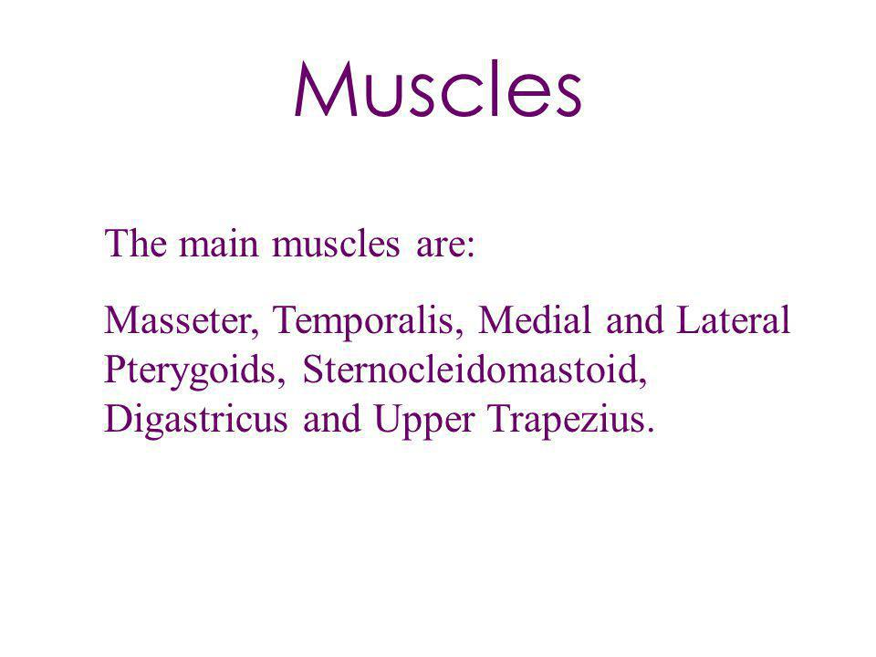 Muscles The main muscles are: Masseter, Temporalis, Medial and Lateral Pterygoids, Sternocleidomastoid, Digastricus and Upper Trapezius.