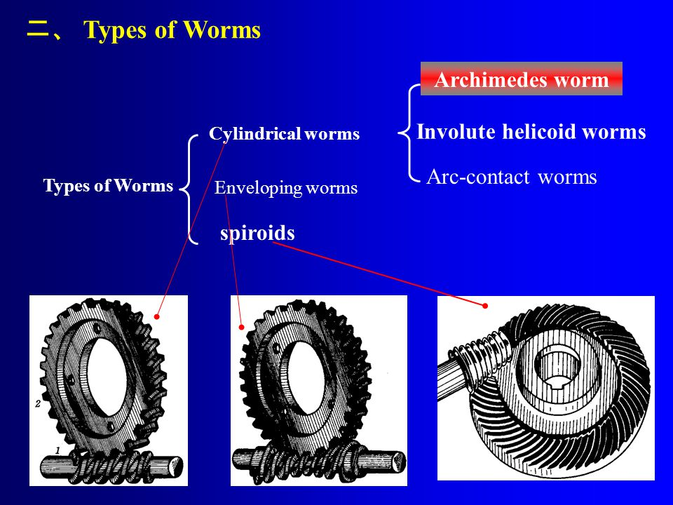 二、 Types of Worms Archimedes worm Involute helicoid worms