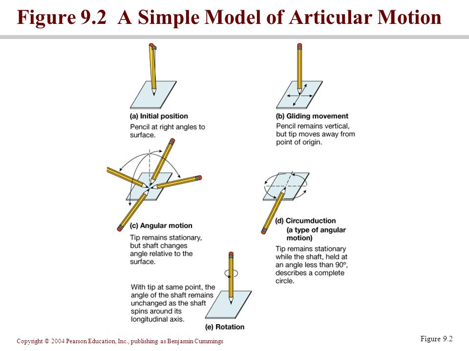 Figure 9.2 A Simple Model of Articular Motion