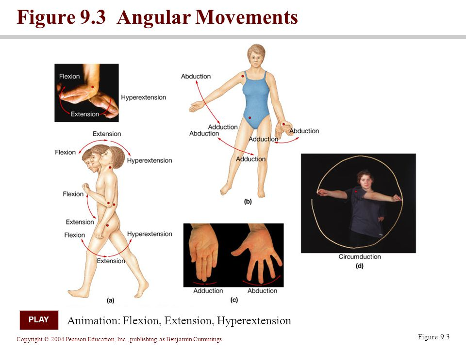 Figure 9.3 Angular Movements