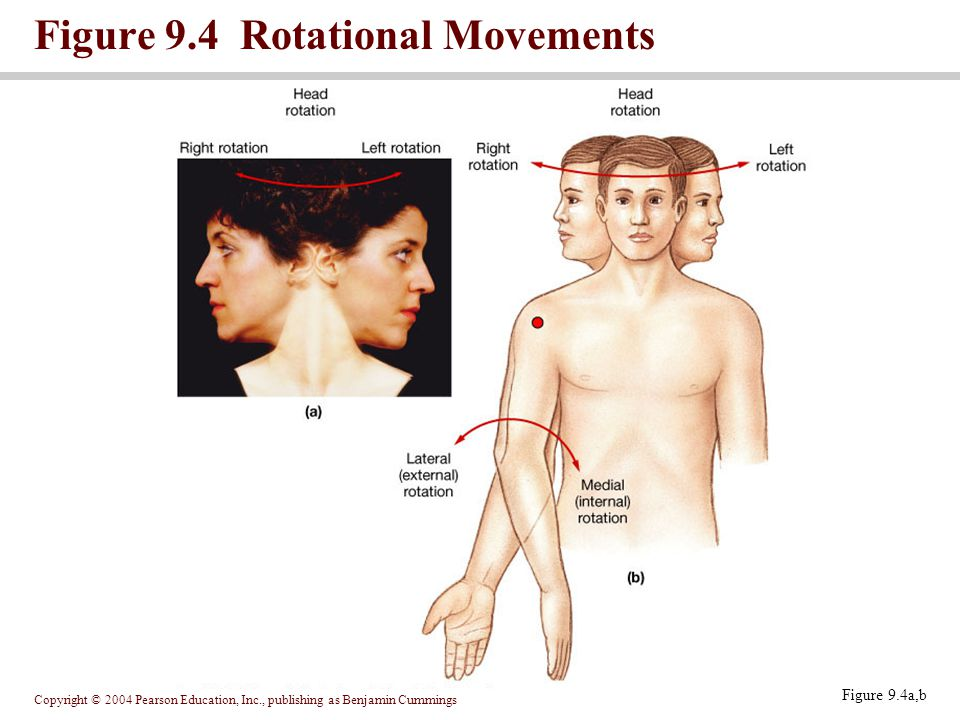 Figure 9.4 Rotational Movements